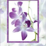Mothers Day Purple Flower Card